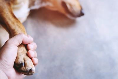 手を握られ横たわっている犬