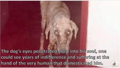 ホームレス犬