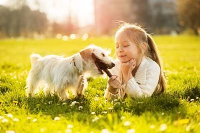 木の枝で遊ぶ犬と小さな女の子