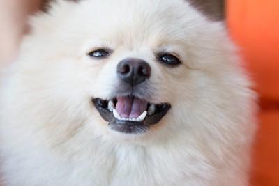 軽く笑っている犬
