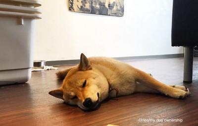 寝転がっている犬