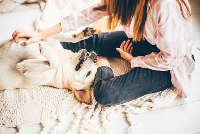 飼い主の足元に寝転んでじゃれ合う犬