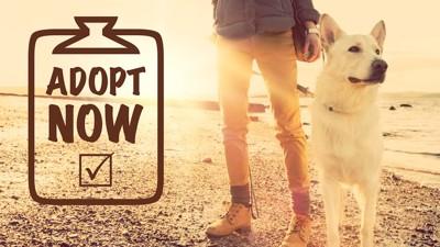 飼い主と散歩をする犬とAdoptの文字
