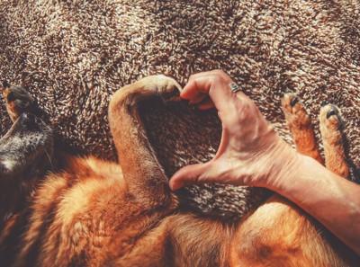 犬の足と人の手で作られたハート型