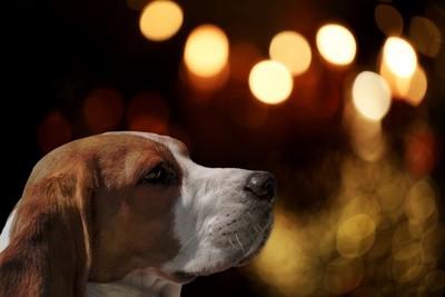 遠くを見つめている犬