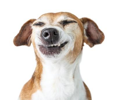 目を閉じて嬉しそうな表情の犬