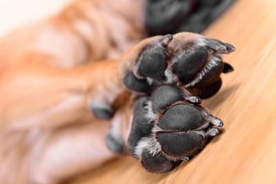 犬の黒い肉球アップ