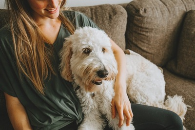 女性とソファで寛ぐ白い犬