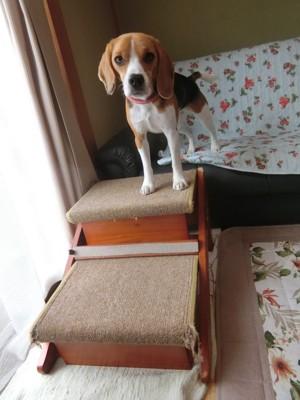 木製ステップと犬の縦長写真