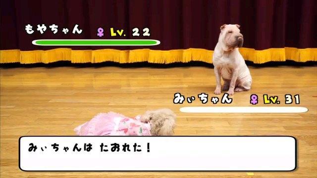 みぃちゃんは~字幕