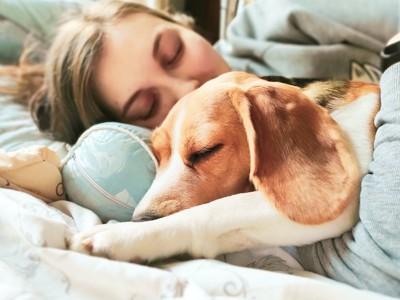 ベッドで一緒に寝ている女性とビーグル犬
