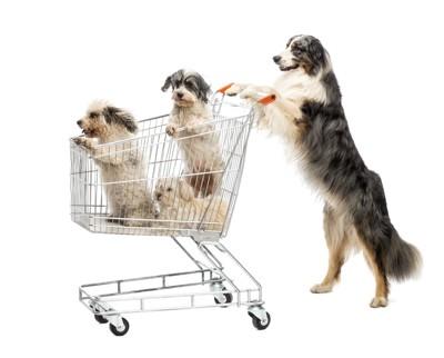 ショッピングカートを押す犬