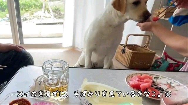 スイカを~字幕