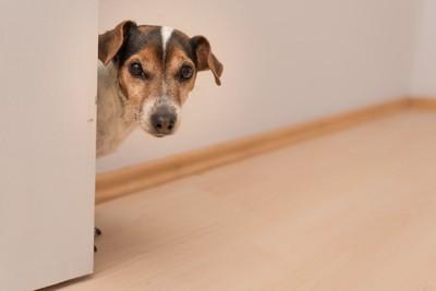 扉の陰から覗いている犬