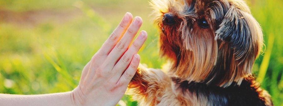 人と手をあわせる犬