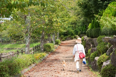 緑の景色の中を散歩する飼い主と犬