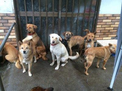 群れのリーダー・玄関前で揃う犬達