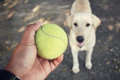 テニスボールを持つ手と犬