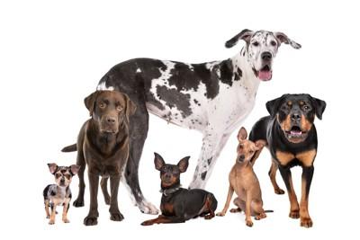 チワワからグレートデンのさまざまな犬種