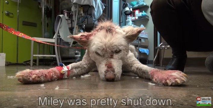 床の上で無気力な犬