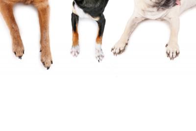 3匹の犬の前足