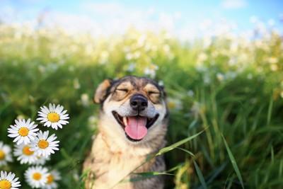 花畑の中で笑っている犬