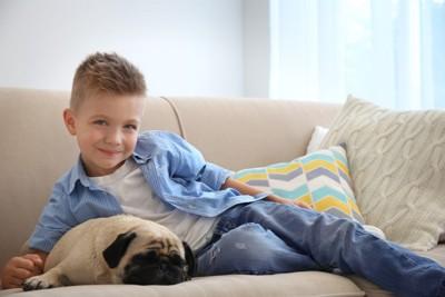 男の子と眠る犬