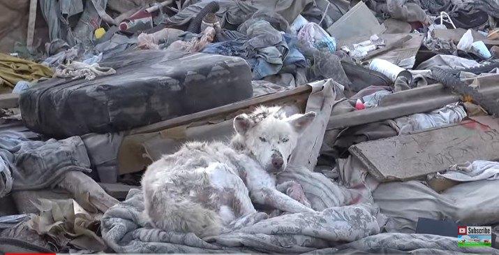 ゴミの山に寝そべる犬