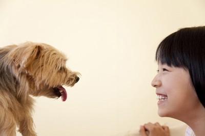 見つめあう小型犬と女の子