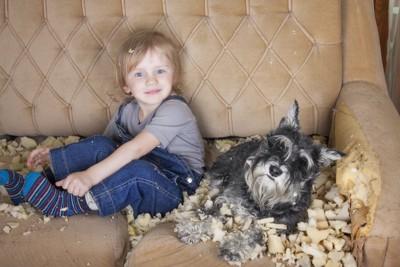 ソファーを破壊する犬と子供