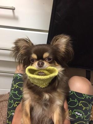 愛犬の変顔写真16枚目