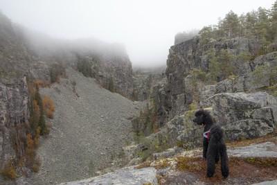 氷河時代の遺跡に立つトイプードル