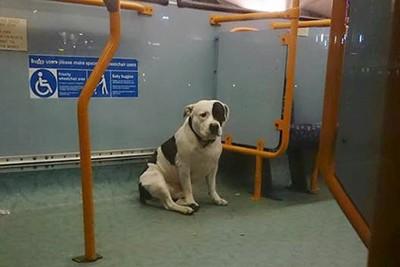 バスの中の灰色の床の上に座る犬