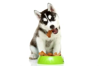 大きなエサを食べる犬