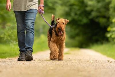 歩幅を合わせて飼い主と散歩をする犬