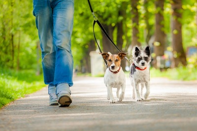 散歩する二匹の犬