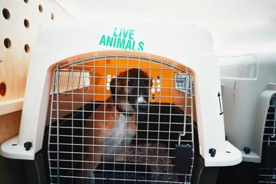 飛行機に載せられている犬