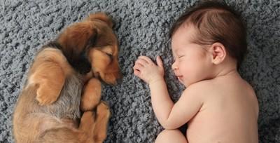 赤ちゃんの隣で一緒に眠っている子犬