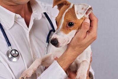 犬を抱っこしている獣医師