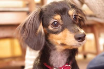 かわいい犬の写真