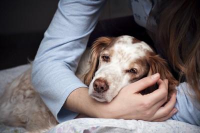 飼い主の腕の中で休んでいる犬