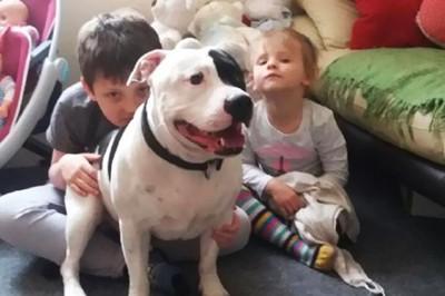 犬と子供2人