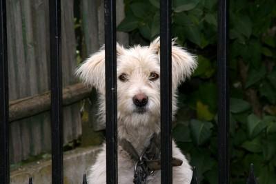 ゲージ内の犬