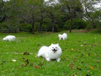 芝生広場の犬