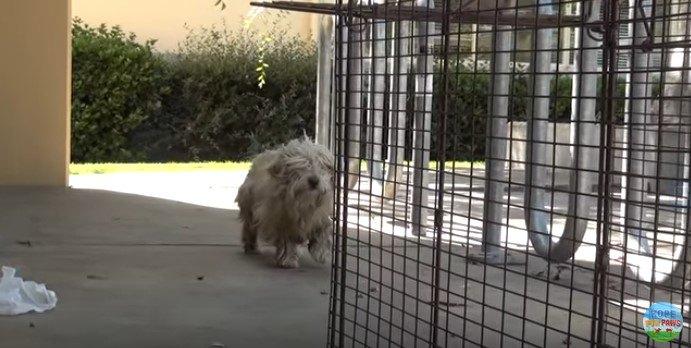 ケージに近づく犬