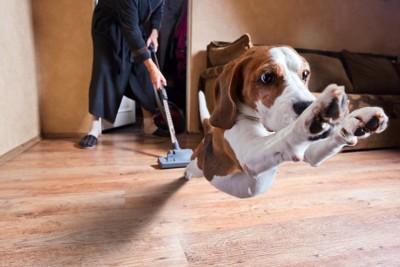 掃除機に驚いて逃げている犬