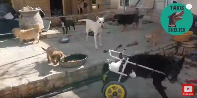 周囲の犬を追い払うブラック