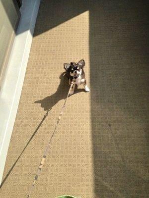 踏ん張っている子犬