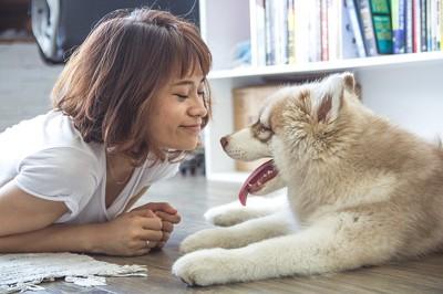 犬とにらめっこする人