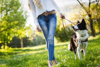 お散歩中の女性と犬